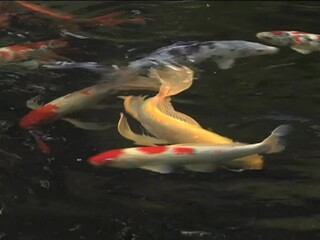 Benefits of fish in your pond ahpresources petco video for Petco fish sale